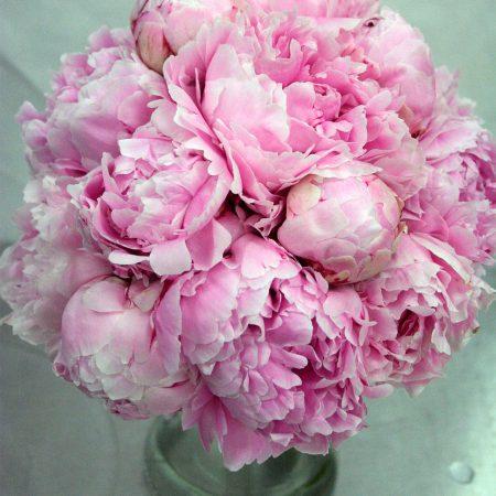 Spring Flowers - Peonies