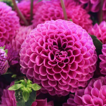 flou(-e)r-specialty-floral-events-dahlia-wedding-flowers-2