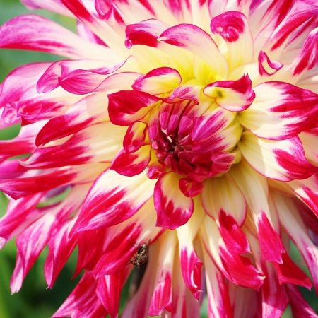 flou(-e)r-specialty-floral-events-dahlia-wedding-flowers-3