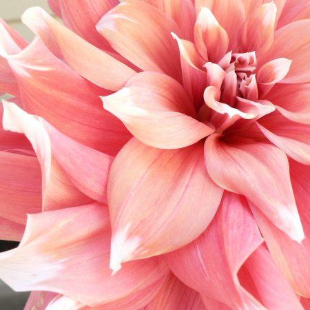 flou(-e)r-specialty-floral-events-dahlia-wedding-flowers-4
