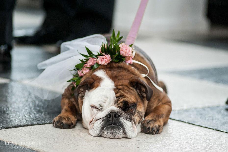 Dog Florals