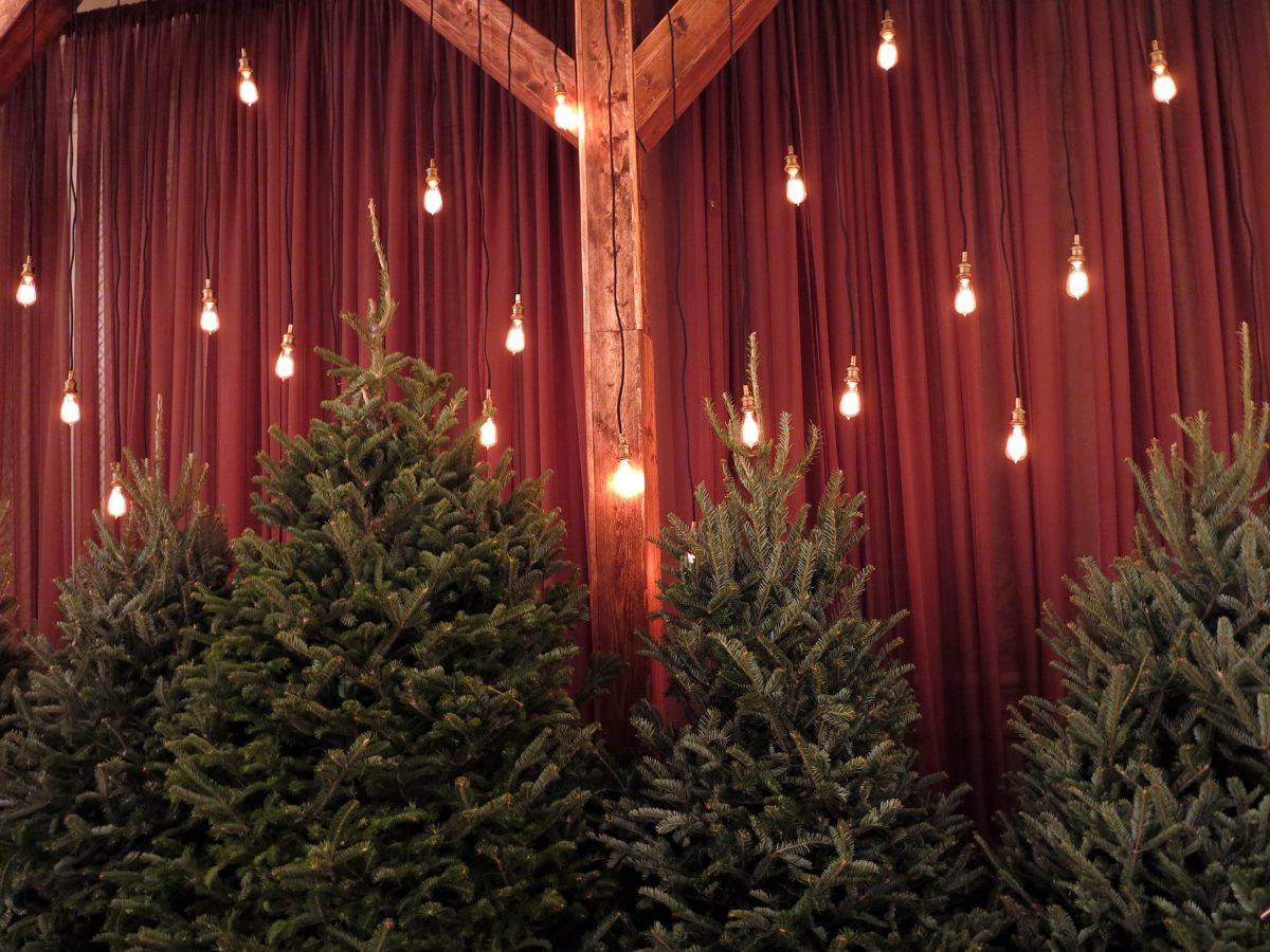 Social - Holiday Trees