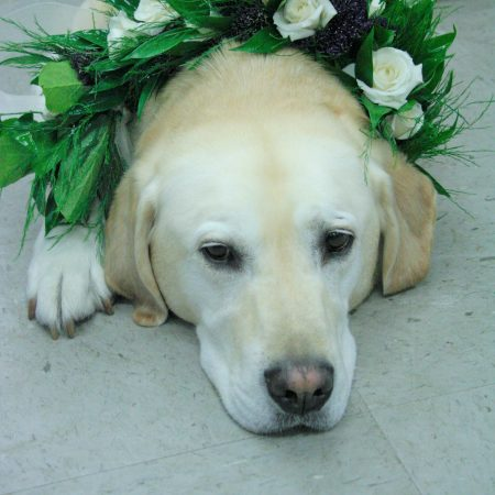 flou(-e)r_specialty_floral_events_wedding_dogs